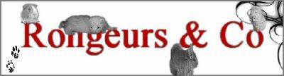 Bannière Rongeurs & Co